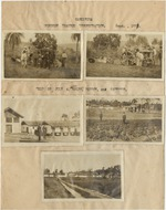 Trips 1921 Gameleira