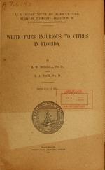White flies injurious to citrus in Florida