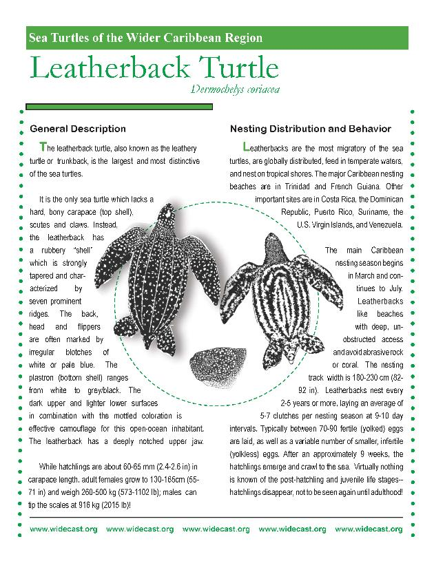 Sea Turtles of the Wider Caribbean Region (fact sheets for six species) - Page 1