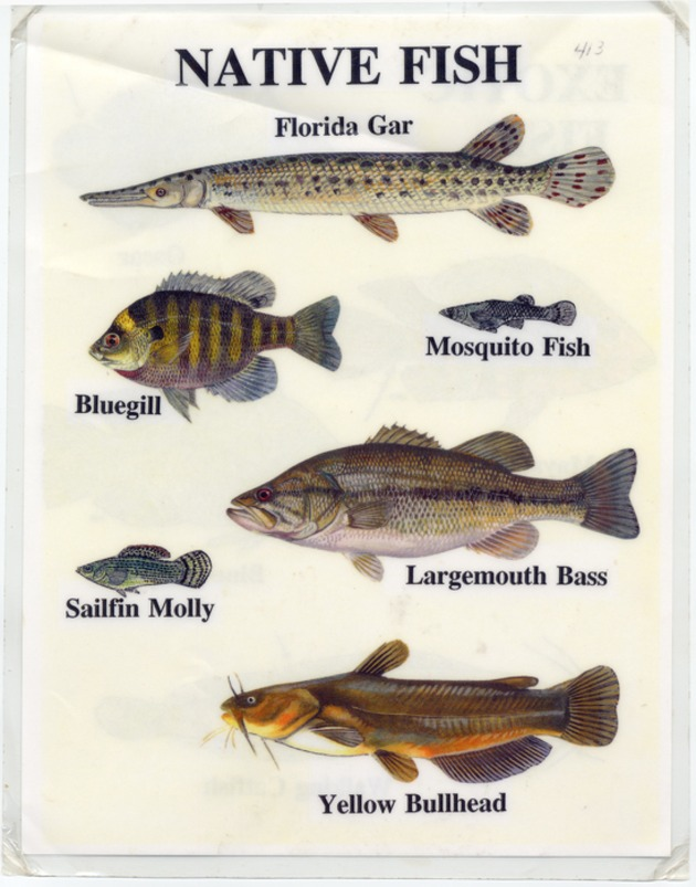 Native Fish - Page 1