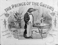 The Prince of Gators cigar label for the Ballard Cigar Factory.