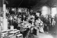 Women cigar packers at the second cigar factory in Ybor City.