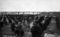 General view of Ybor City 1889.