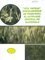 ICTA Patzun, nueva variedad de trigo para el altiplano central de Guatemala
