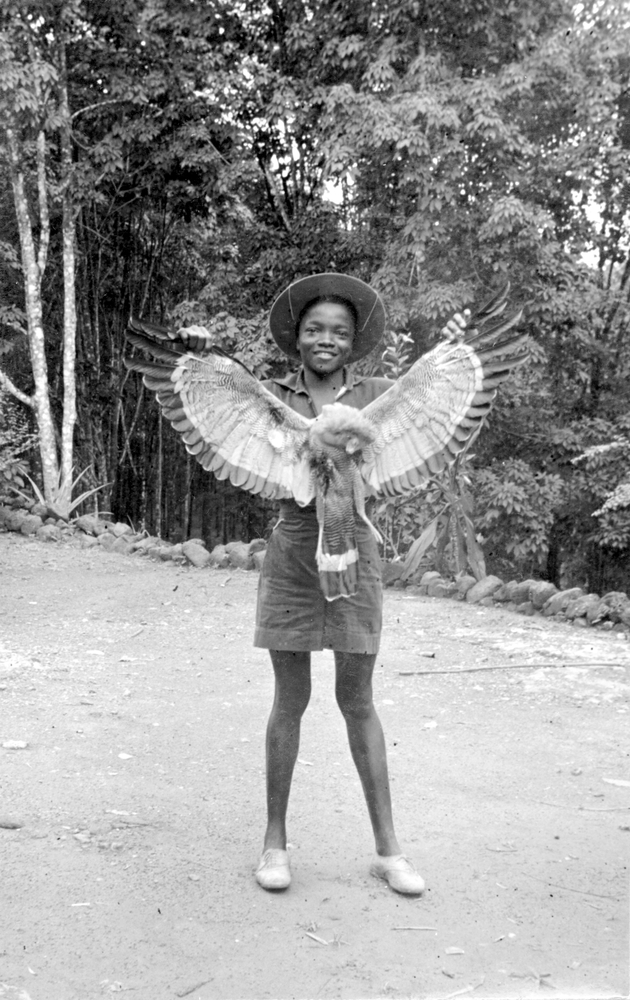 Photo: Young Liberian displaying underwing plumage of an African Harrier-hawk.