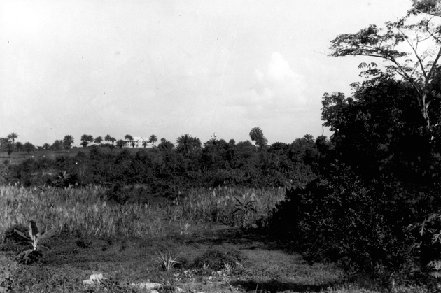 Photo: Landscape photograph with forest, plantation building in background with water tower.