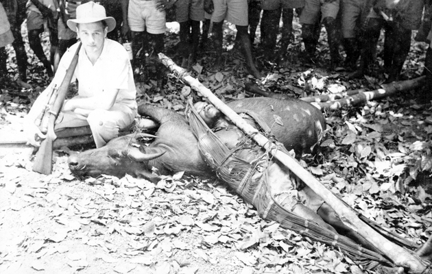 "Photo: American man with rifle poses over ""bush cow"" or buffalo trophy. Note Liberian man in hammock, who died, as Will Manis recalled, when the buffalo charged and gored him."