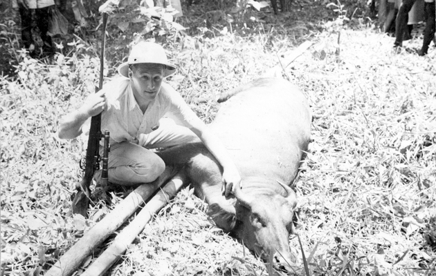 Photo: Second American man with rifle poses over buffalo trophy.