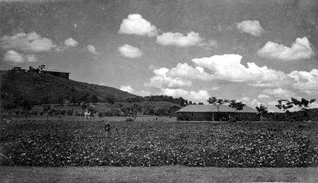 Photo: Plantation landscape with road, building in background on a hill.