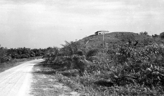 Photo: Wide plantation landscape with fence in foreground, buildings behind.