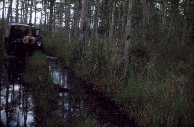 Mule Pen Trail.  Bayheads often wet. (Jeep on trail)
