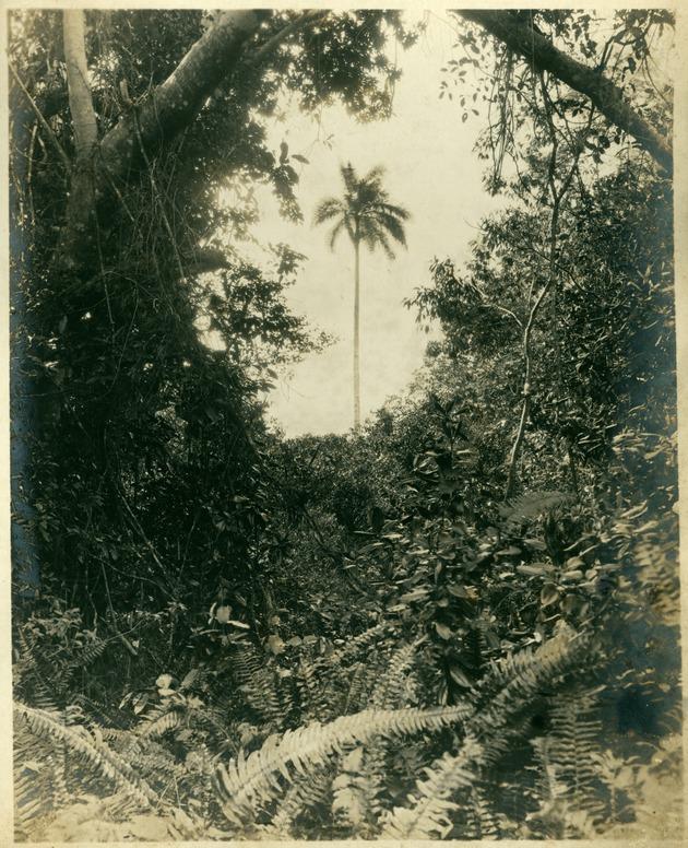Royal Palm Park #3 - Image 1