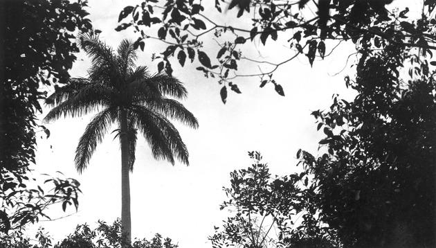Royal Palm Park #5 - Page 1
