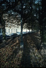 View of ground covered by fallen leaves