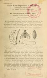 "The apple maggot or ""railroad worm"" (Rhagoletis [Trypeta] pomonella Walsh.)"