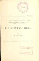 The greenhouse thrips [Heliothrips haemorrhoidalis Bouche]