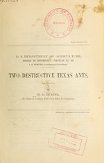 Two destructive Texas ants