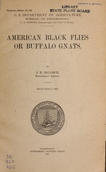 American black flies or buffalo gnats