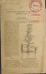Canada thistle (Carduus arvensis (L.) Robs.)