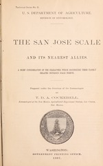San Jose scale and its nearest allies