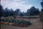 Rows of flowering plants at Hope Botanical Gardens