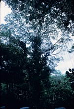 A tropical forest in Jamaica