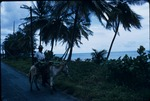 A Jamaican man riding a donkey on a seaside road