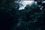 A forest and stream in Jamaica