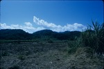 A harvested sugarcane field and mountains in Jamaica