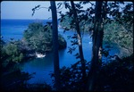 View of boats in Blue Lagoon, Portland, Jamaica from breadfruit trees