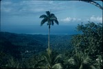 Palm tree and mountains in Saint Ann, Jamaica