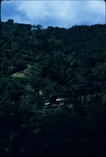 A home in the mountains of Moore Town, Portland, Jamaica