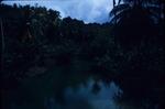 "View of the tree line from ""Blue Hole"" Lagoon near Port Antonio, Portland, Jamaica"