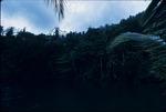 "Tree line along ""Blue Hole"" Lagoon near Port Antonio, Portland, Jamaica"