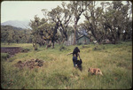 Bob Campbell photograph of Dian Fossey with orphaned infant gorillas Coco and Pucker and her dog Cindy, Rwanda 1969