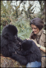Bob Campbell photograph of Dian Fossey with orphaned gorillas Coco and Pucker, Rwanda 1969