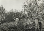 Cuban sugar workers and sugar mills photographs