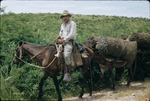 Man on horse transporting charcoal