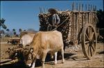 Sugar cane carts