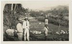 Sanitary inspectors Codling and Cameron in front of watercress beds in August Town, Jamaica