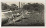 Construction of drainage system at East Avenue in Greenwich Farm, Jamaica