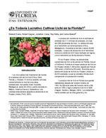 ¿Es Todavia Lucrativo Cultivar Lichi en la Florida?