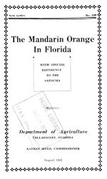 The mandarin orange in Florida