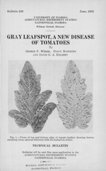Gray leafspot