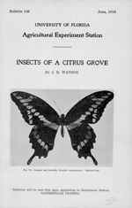 Insects of a citrus grove