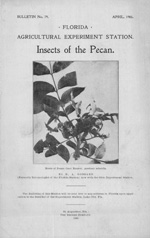 Insects of the pecan