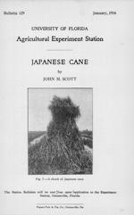 Japanese cane