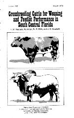 Crossbreeding cattle for weaning and feedlot performance in south central Florida
