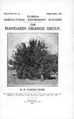 The mandarin orange group