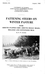 Fattening steers on winter pasture with ground snapped corn, ground shallu heads, molasses and cottonseed meal